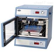 Stuart微孔板震荡培养箱