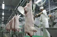 生猪屠宰场专用电子轨道秤屠宰秤
