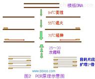 新港沙门氏菌PCR检测试剂盒说明书