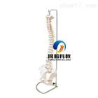 THM-105自然大脊椎带骨盆模型