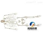 THM-130全身散骨模型自然大模型|骨骼