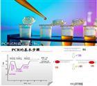 PCR试剂盒