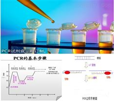 荧光探针pcr试剂盒