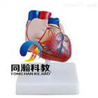 THM-307B新型自然大心脏解剖模型
