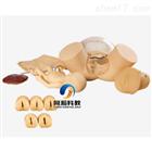 TAH-F50B高級分娩綜合技能訓練模型|婦嬰