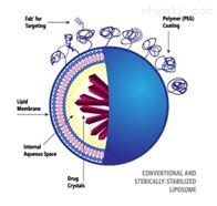 納米脂質體合成系統