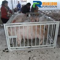 淮南称牛电子平台磅称/1.5吨小地磅价格