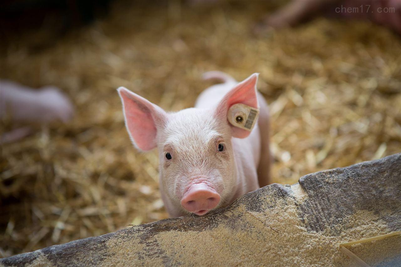 Enterit 4 swine-DNA Diagnostic 豬腹瀉檢測試劑盒