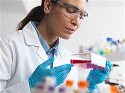 RAB-iCell-s005兔骨骼肌细胞/免疫荧光鉴定
