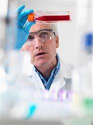 RAB-iCell-s006兔骨骼肌成纤维细胞/免疫荧光鉴定