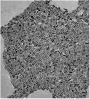 金纳米金纳米粒子(GNPs)Gold Nanoparticles,Au