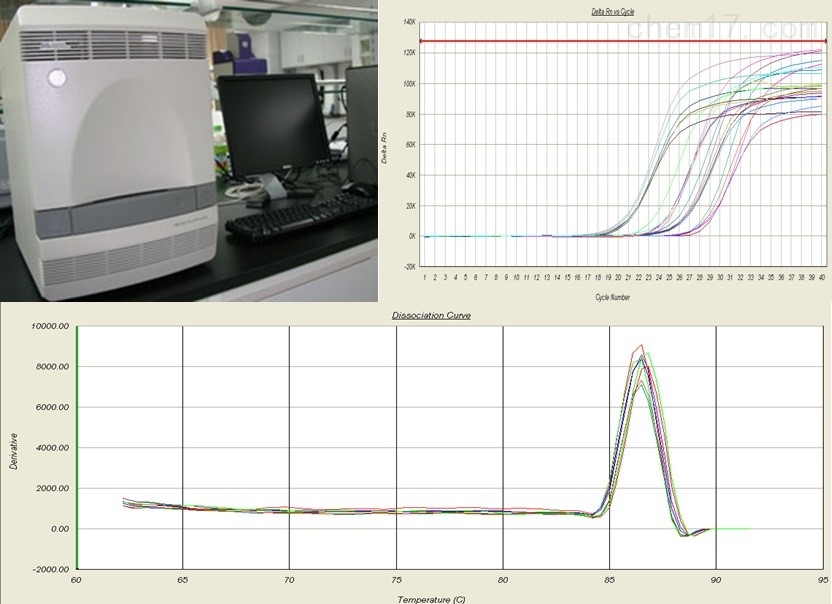 实时荧光定量PCR技术服务分子生物