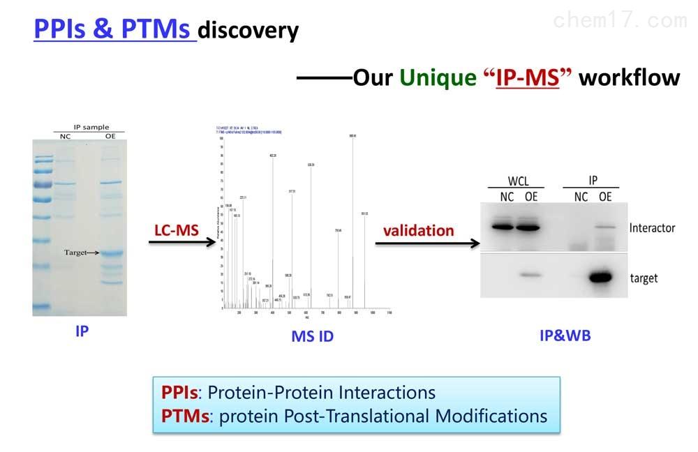 IP-MS:蛋白质互作/后修饰整体服务