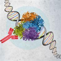 染色质免疫沉淀CHIP