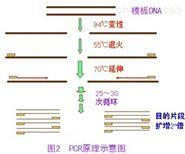 转基因大豆MON87708品系核酸试剂盒规格