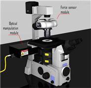 细胞组织力学特性定量测试分析光镊