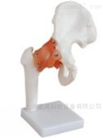KAC/110自然大膝关节模型