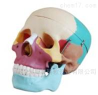 KAC/104C彩色自然大头骨模型