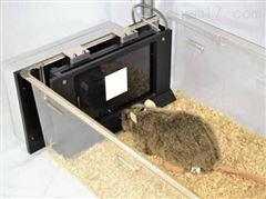 R-ICTS齧齒動物觸屏行為認知測試係統
