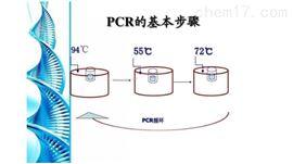 荧光pcr试剂盒价格