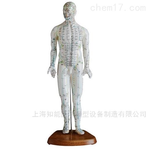 人体针灸模型(50cm)
