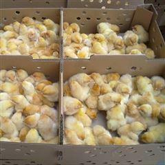 鸡苗周转运输纸箱