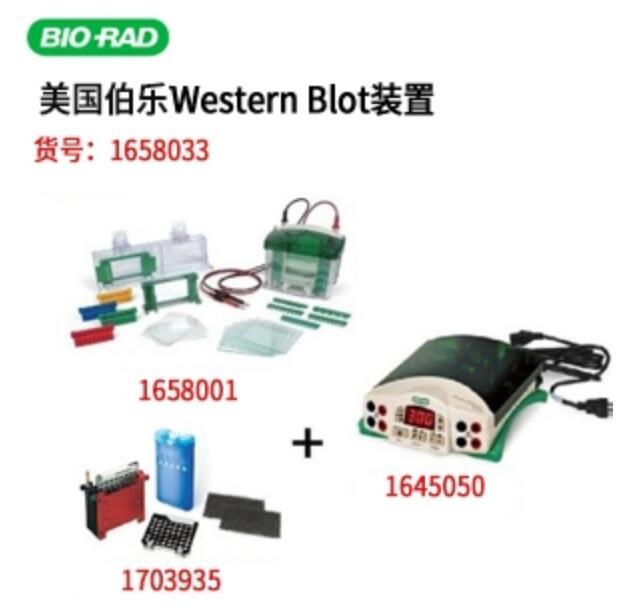 美国伯乐Bio-Rad小型垂直电泳转印系统(电泳槽+转印芯+基础电源)1658033