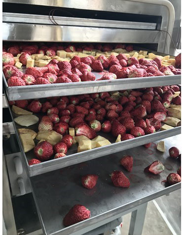 草莓冻干机