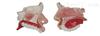 ZK/XC-309鼻腔解剖模型