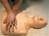 KAN/CPR185可调成年人与儿童心肺复苏模拟人(简易型)